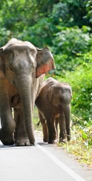 Słonie w Kambodży