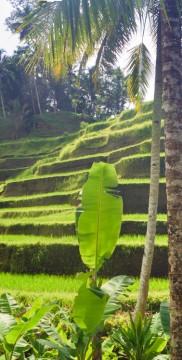 Uroki Indonezji